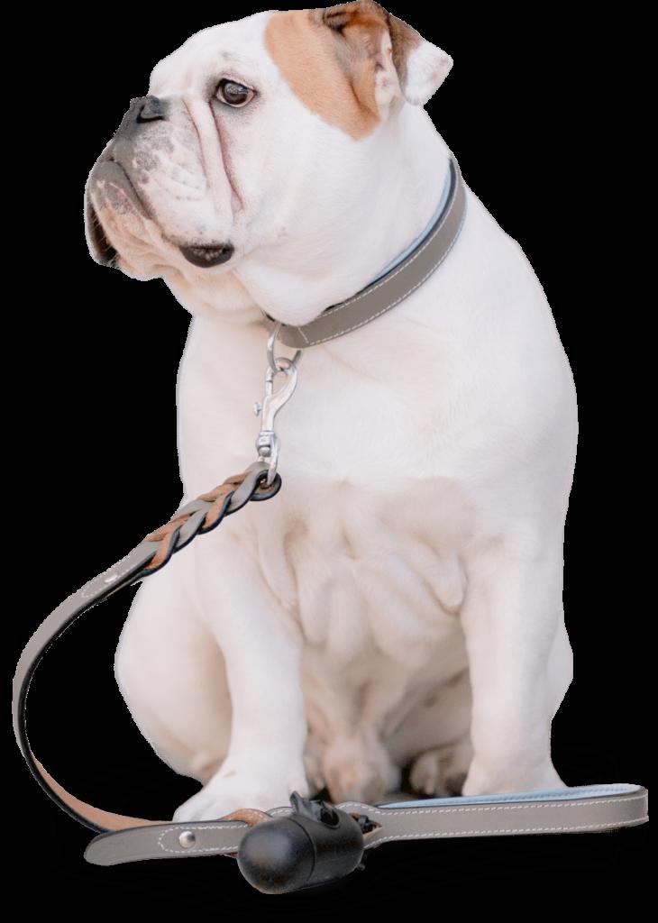 merry puppins bajka za pse pas koji sedi
